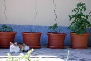 Freitagslieblinge: Zuhause ist es am schönsten – öfters