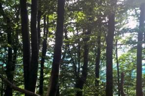#Nachhaltigjetzt – wie du umweltbewusst leben kannst