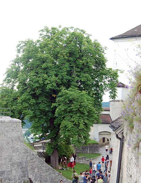 Ritterfest auf der Burg Kufstein