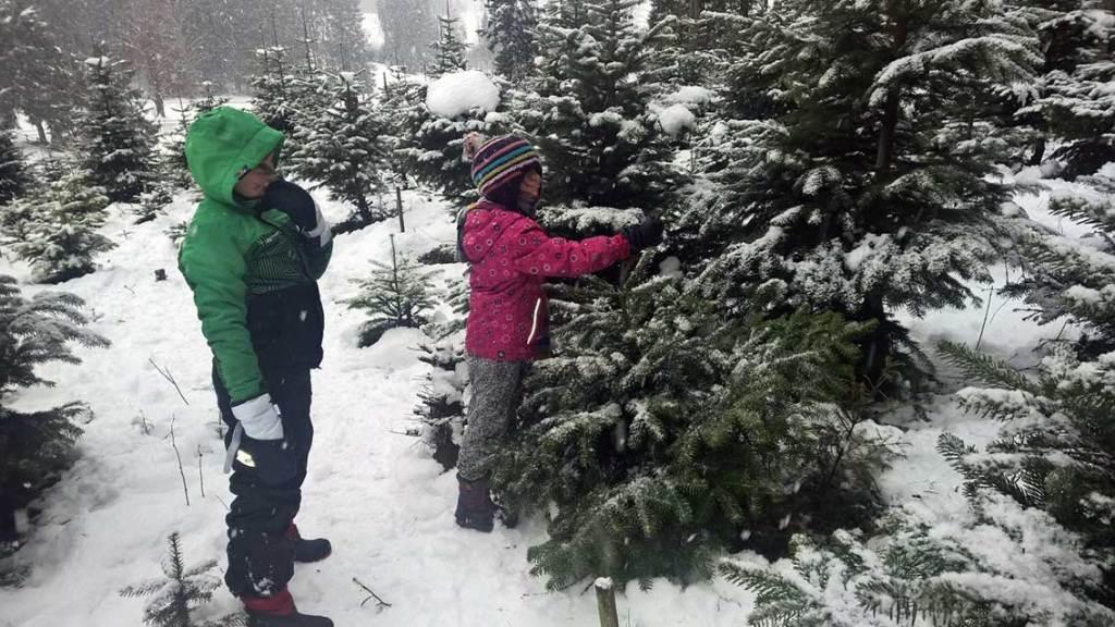 Müllvermeidung in der Weihnachtszeit: Christbaum selber schlagen: Hol Dir Deinen Tannenbaum aus dem Wald