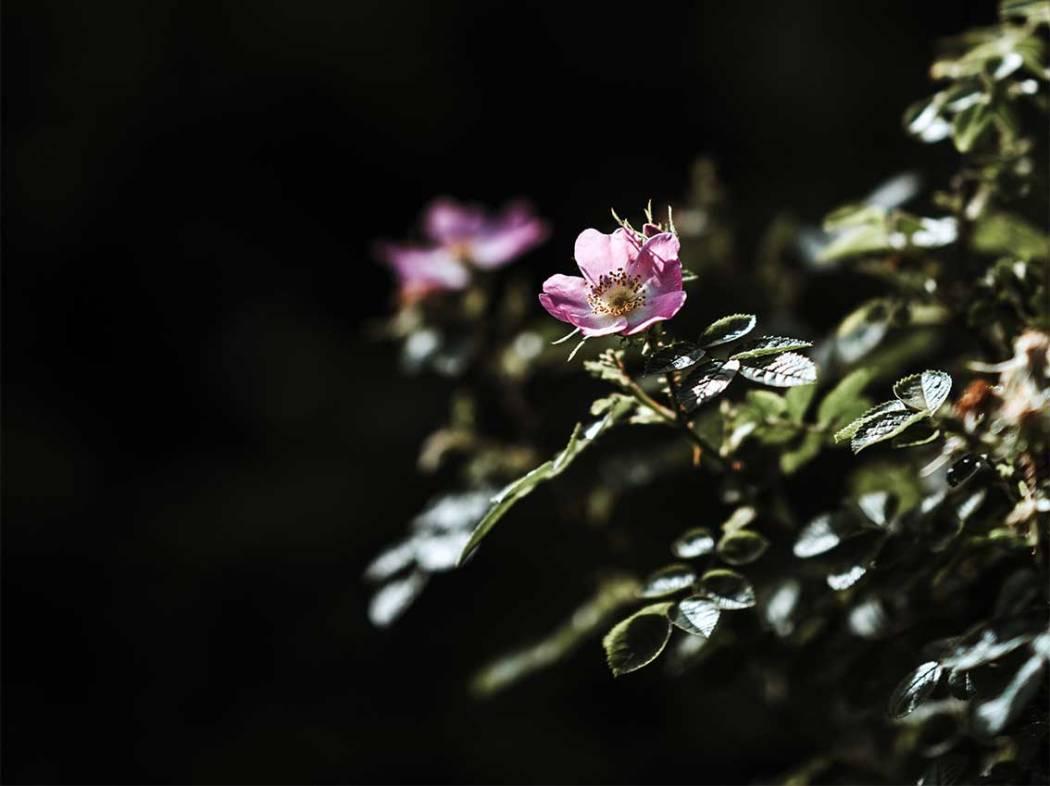 Bachblüten für Kinder