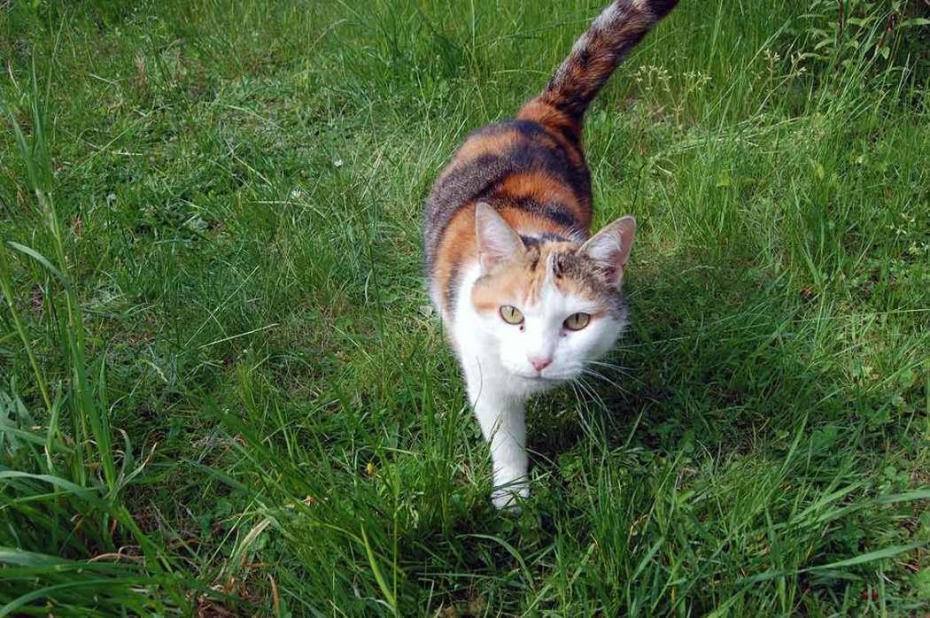 wertvolle Mini-Auszeit dank Katze rettet das Wochenende