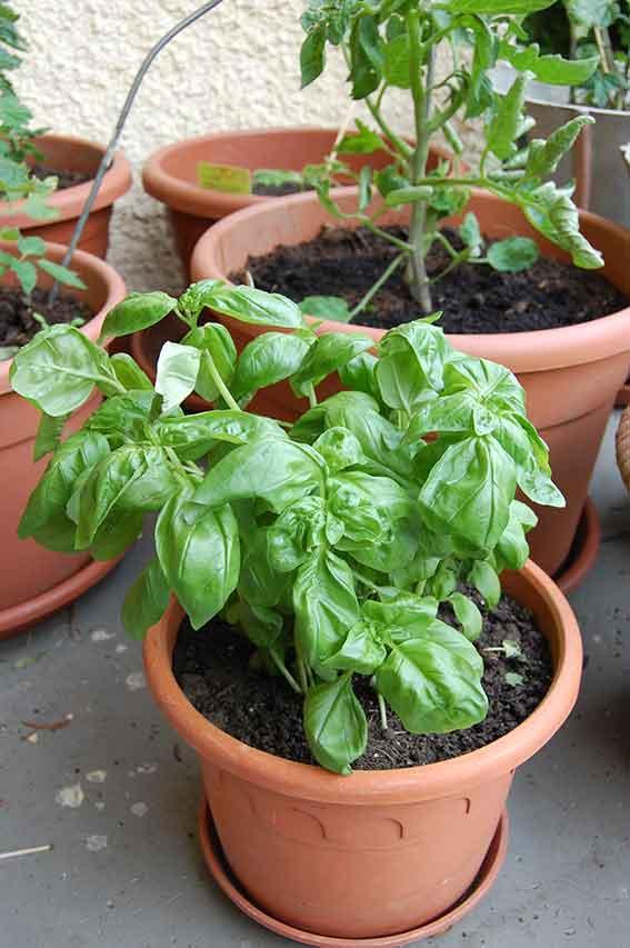 Gartenarbeit: wertvolle Mini-Auszeit im Garten rettet das Wochenende
