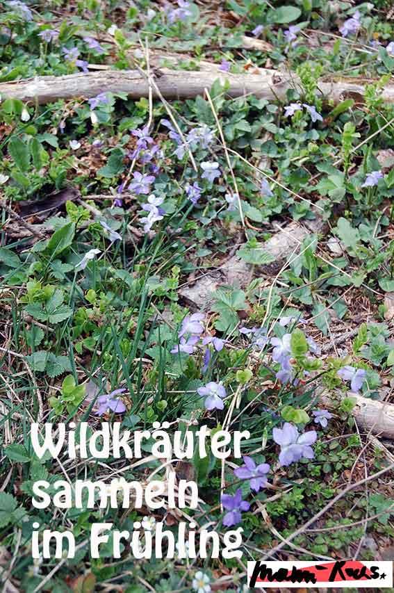 Wildkräuter sammeln im Frühling