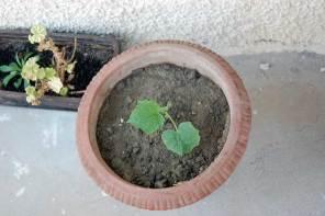 Jungpflanzen setzen im Garten – 12 Bilder im Mai