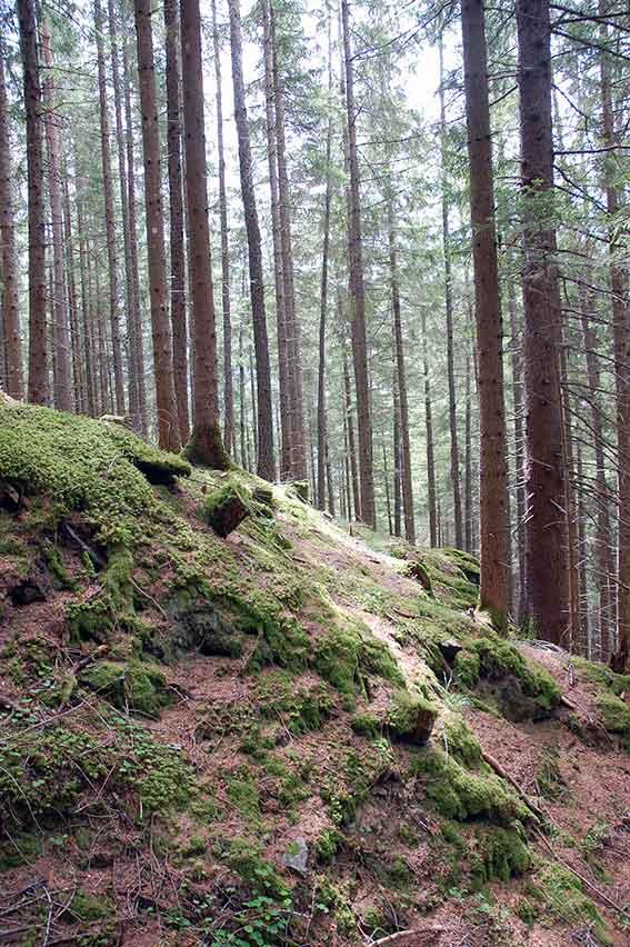 Wanderung zur Patscher Alm