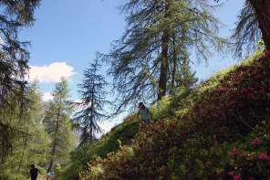 Naturspiele mit Holz und Steinen, Zapfen, Beeren & Co.