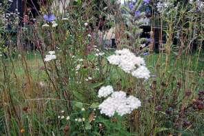 Was blüht im Spätsommer? Garten im August #12von12