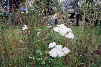 Garten im August: Was blüht im Spätsommer