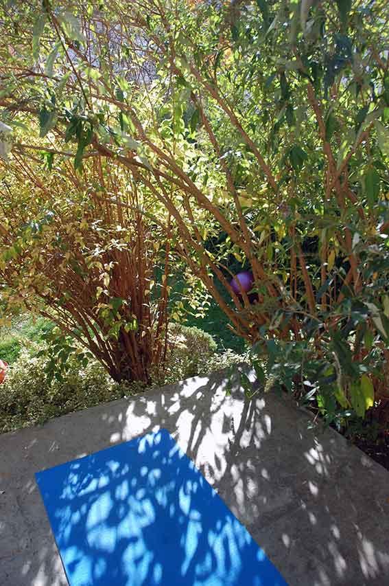 Yoga zuhause üben: Samhain Herbst Natur