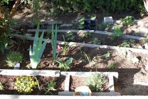 Projekt blühender Garten von März bis November