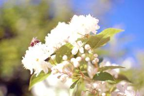 Mai im Garten – endlich blüht und treibt die Natur