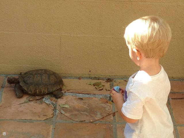 Baby and Tortoise