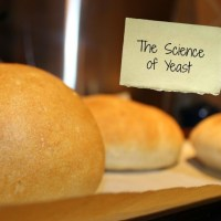 Discovering the Science of Yeast