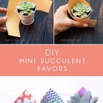 Diy Mini Succulent Favors For A Baby Shower Mami Talks