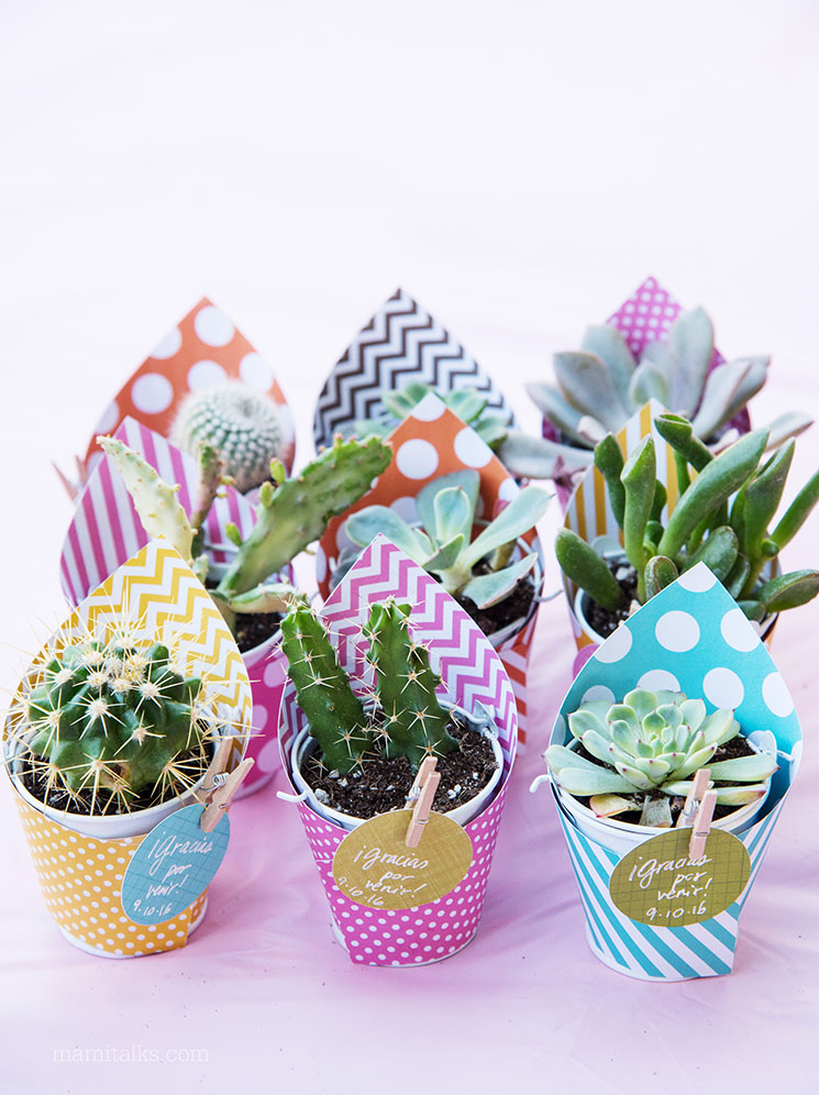 DIY Mini Succulent Party Favors | Mami Talks
