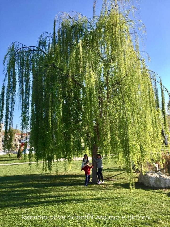 Pineto-parco-zen
