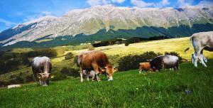 Un giorno in Fattoria - Abbateggio - Pescara- Eventi per Famiglie Abruzzo