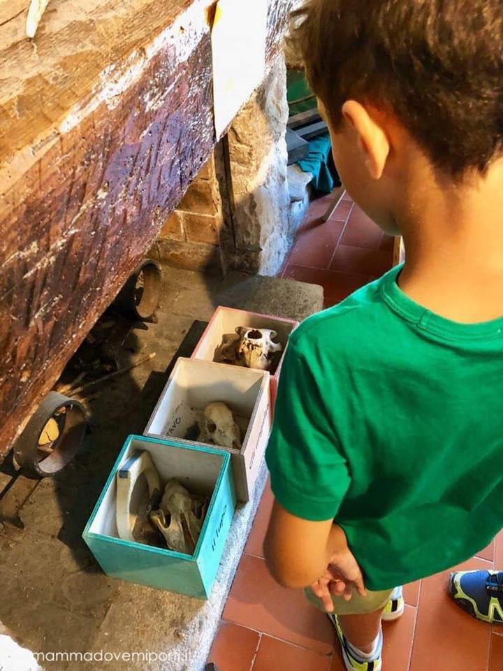 ossa-del-lupo-museo-del-lupo-civitella-alfedena-laquila