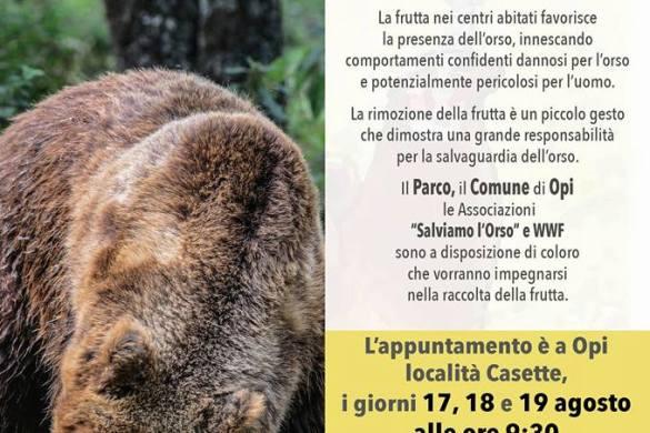 Se-togli-la-frutta-aiuti-l-orso-WWF-Opi-AQ-Eventi-per-famiglie-Abruzzo