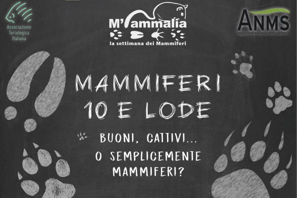 Un-sabato-da-mammiferi-Pescara- Eventi per bambini Pescara