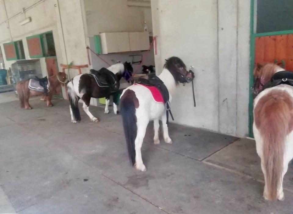 I Cavalli di L'Arcobaleno Asd Pianella di Pianella di Pescara