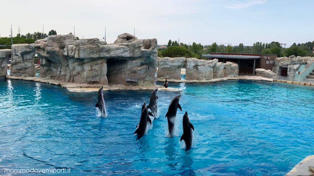delfini a oltremare con vivipari card