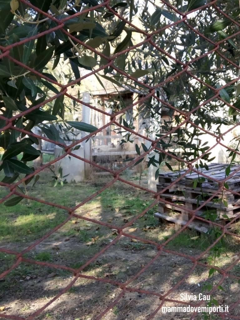 Piste ciclabili a Pescara: pecore Pista Ciclabile Parco Fluviale