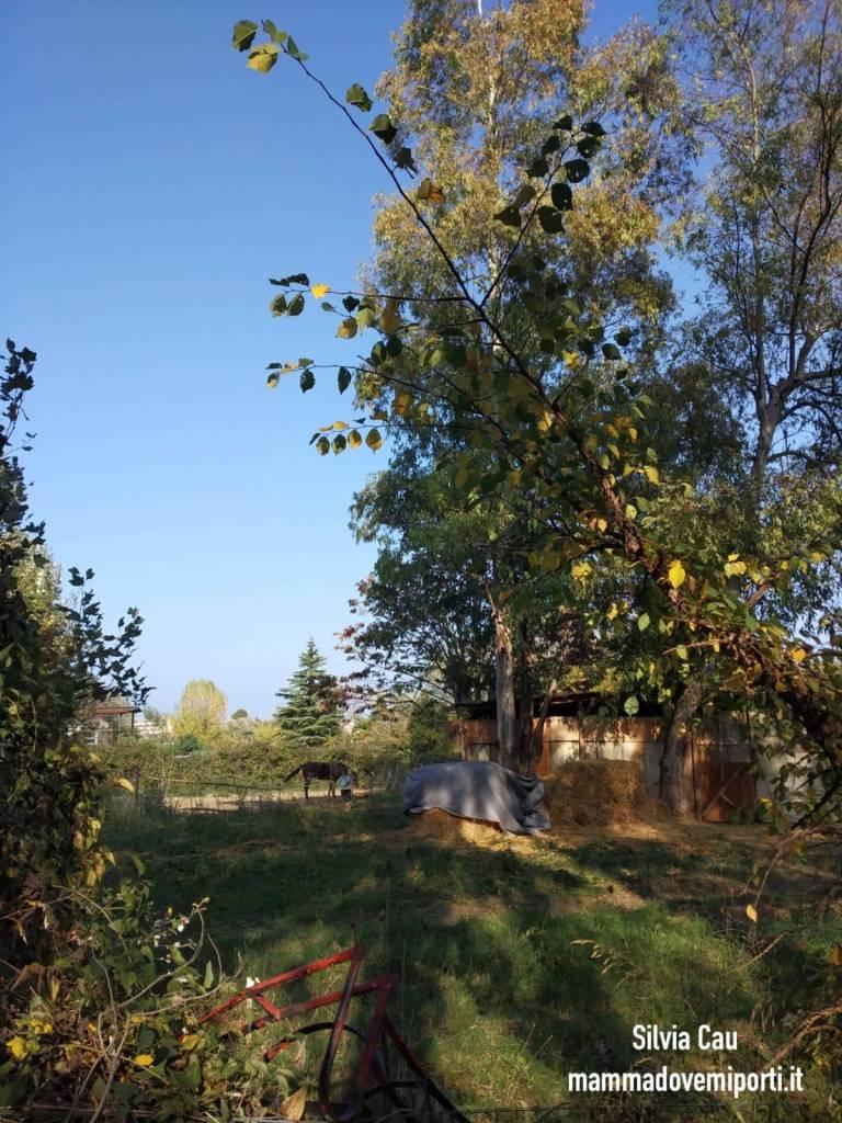 Piste ciclabili a Pescara: cavallo vicino alla Pista Ciclabile Parco Fluviale