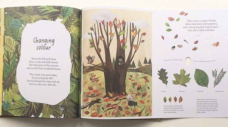 Double page from A walk through nature showing fold out page.