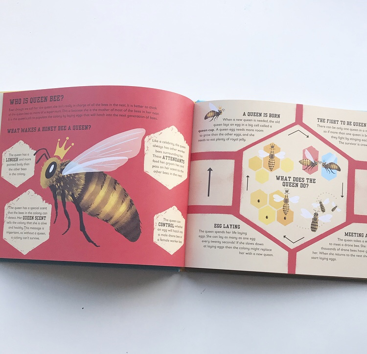 The Bee Book by Charlotte Milner on mammafilz.com