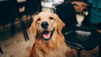 filaria cani sintomi cura