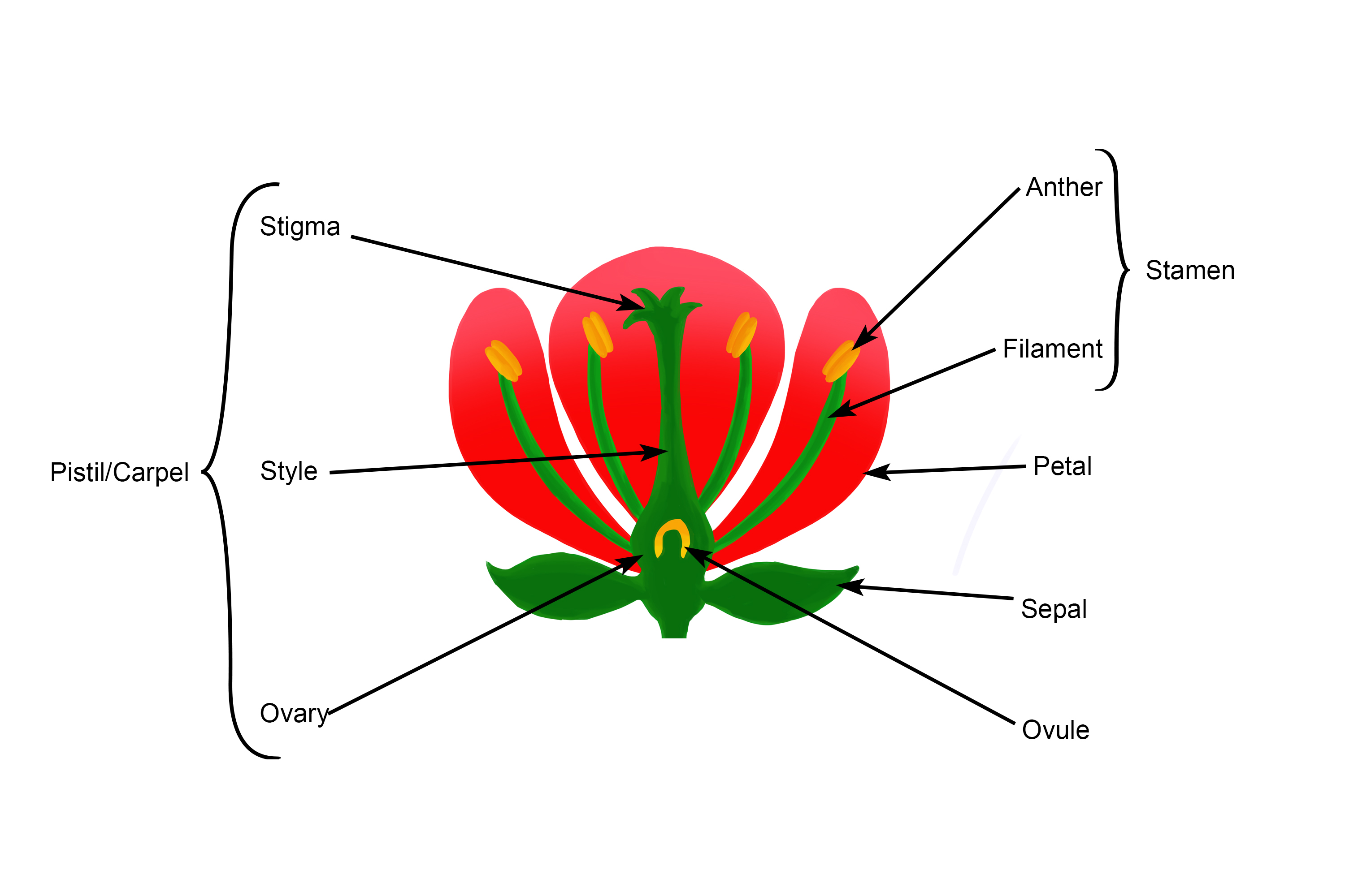 Flower Has Male Stamen Female Stigma Reproductive Organs