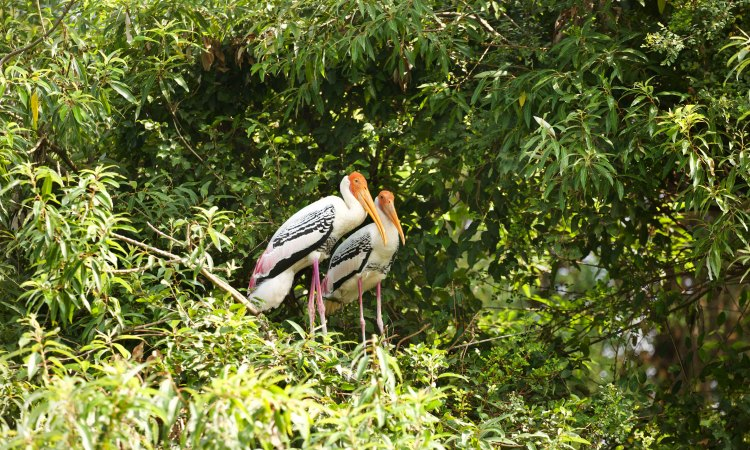 Trip to  Ranganathittu Bird Sanctuary