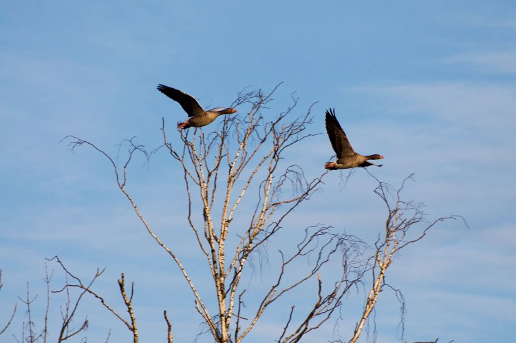 Birdwatching in Hamburg and Other Stories