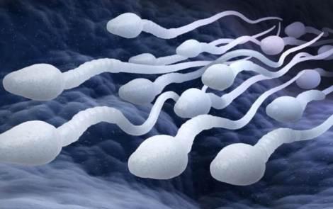 Les spermatozoïdes, garants de la fertilité masculine