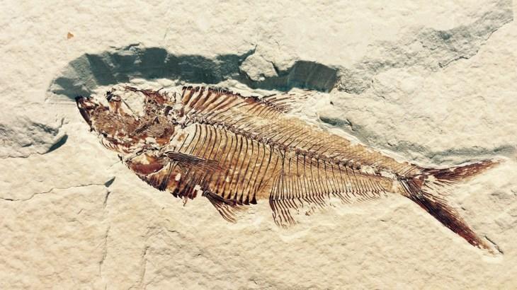 中1 理科 示相化石と示準化石まとめと問題