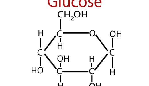 生体内の糖まとめ