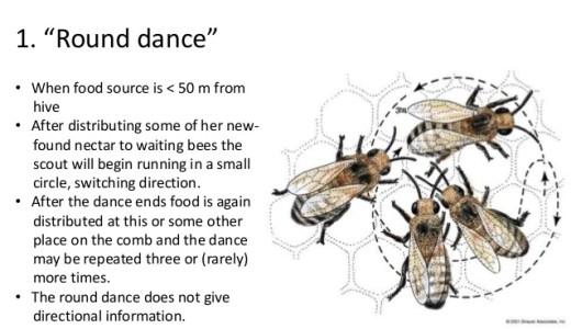 ミツバチのダンス-方向・距離・匂い-