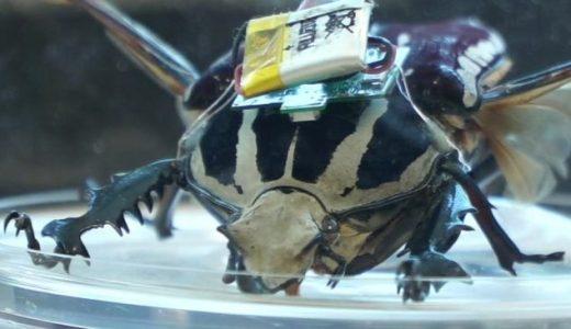 電極を埋め込んだ甲虫を操る最新テクノロジーがすごすぎる