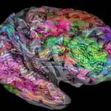 ある単語を認識する時に脳のどの部分が使われているのかをマッピングしてみてわかったこと