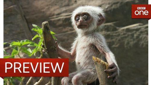 動かないロボット赤ちゃん猿のことを周囲の猿が心配しまくっていて心苦しくなる