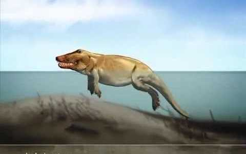 クジラへの進化途上の生物が予想以上にただの獣