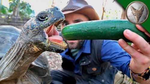 ゾウガメがムシャムシャ野菜を食べるだけの動画に癒される