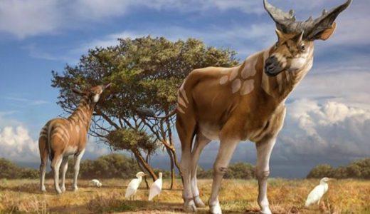 【Q&A】キリンは何の生物から進化したの?