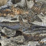 【NEWS】恐竜を絶滅させたと考えられている隕石「チクシュルーブ衝突体」によって死んだ魚類の化石が発見される