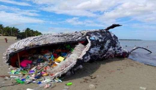 ノルウェーの海はどうなってる?プラスチックゴミに溢れている!
