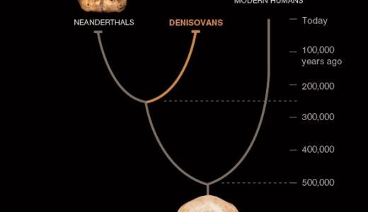 【NEWS】チベットで16万年前のデニソワ人の化石が見つかる