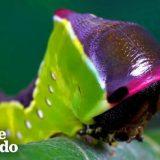 モクメシャチホコ(蛾)が卵から成虫になるまでの過程を撮影してみた