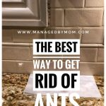 The BEST Way To Get Rid Of Ants…and pictures to prove it!